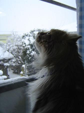 Alan_snow2006