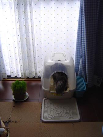 Alan_toilet1
